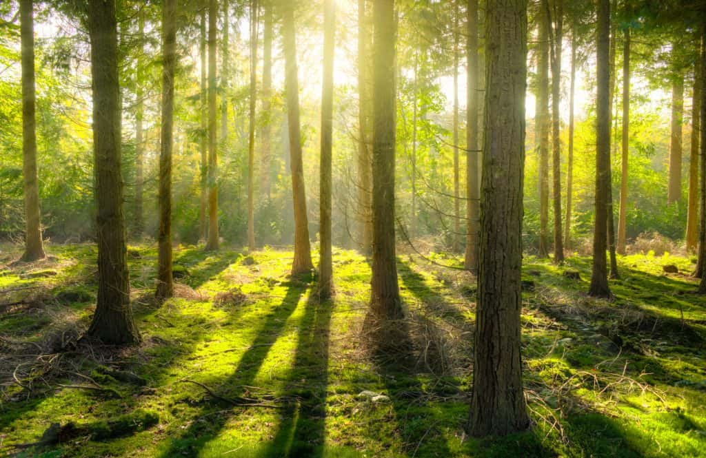 bomen CO2 neutraal